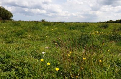 Pembrokeshire_Natural_Burial_Ground_Buttercups_Meadow5057.jpg