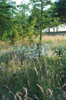 woodland_glade_3.jpg