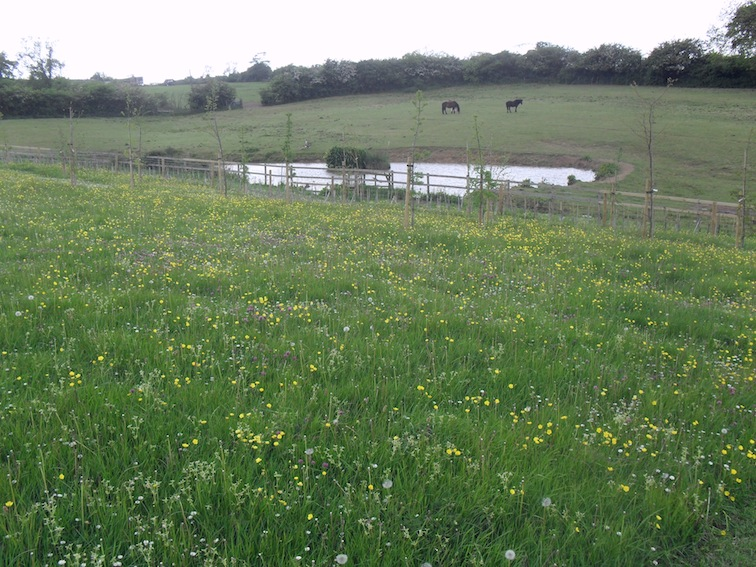 The Willows Natural Burial Ground